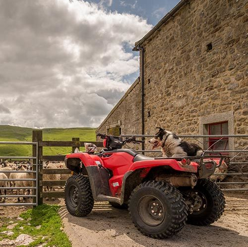 Border Collie waiting on the back of a red ATV for its owner